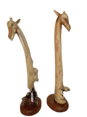 Giraf Parasiethout