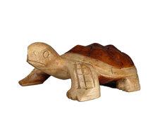 Schildpad tweekleurig